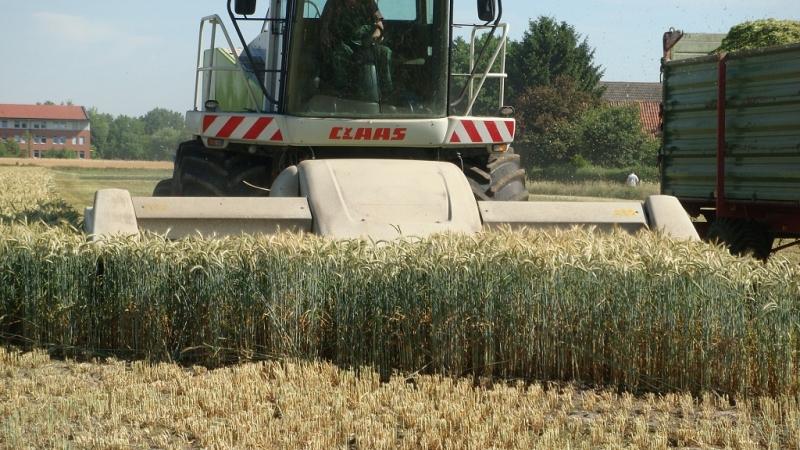Ganzpflanzensilage (GPS)